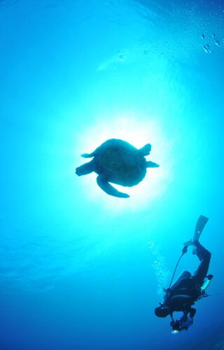 ダイビング01